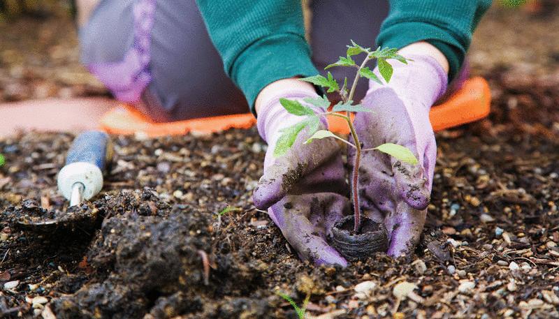Весняні роботи на городі
